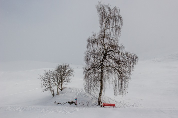 No leaves, no people: A bare birch tree and an empty bench on a cold winters day