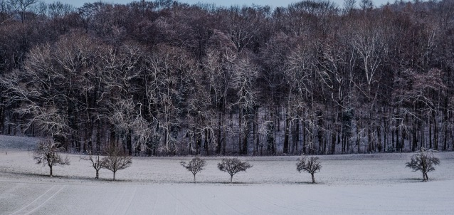 You can't get through: A view of a line of trees facing the local woods highlighted by the first snows of winter.