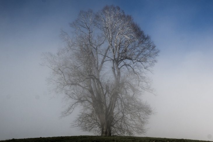 My crown is silver: A view of a frosted tree as mist swirls by.