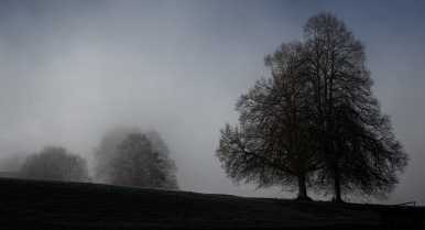 We stand tall: A view of trees on a misty cold morning