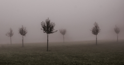 All present and correct: A view of newly planted trees in the autumn mist