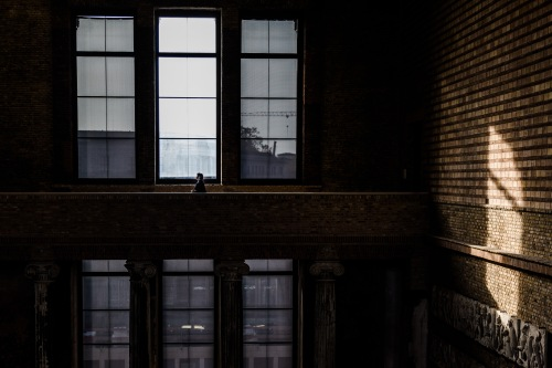 What is missing?: In the Neues Museum, Berlin